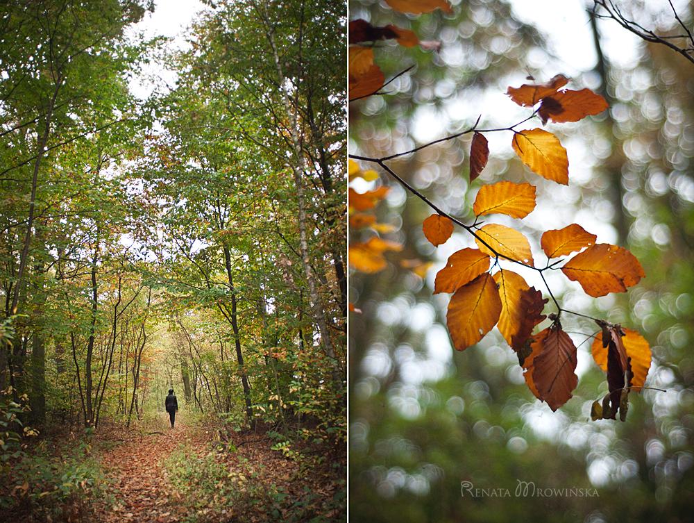 buk zwyczajny, spacer po lesie