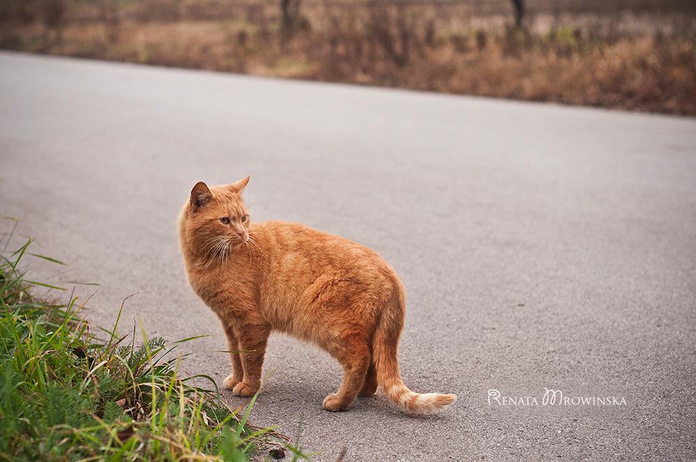rudy-kot