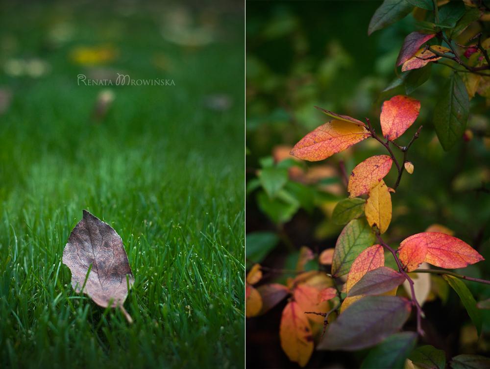zielona-jesien